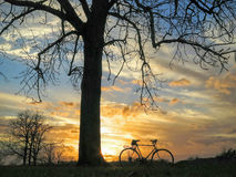 Bicycle and Tree Silhouette. Sunset behind bike and trees with clouds in background Royalty Free Stock Photography