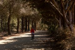 Bicycle trip in a wood on the island of Porquerolles stock photos