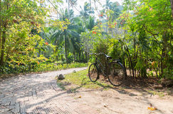 Bicycle at tropical park roadway Stock Photography