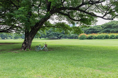 Bicycle under big tree. Bicycle on grass under big tree stock photography