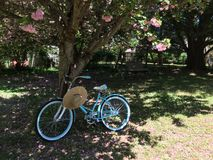 Bicycle under a Cherry Tree Stock Photos