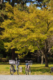 Bicycle under the tree Royalty Free Stock Image