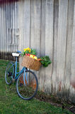 Bicycle and Vegetables. Old Bicycle with basket full of fresh vegetables royalty free stock photos
