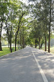 Bicycle way road in green forest of a city park Stock Image