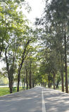 Bicycle way road in green forest of a city park Stock Photography