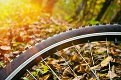 Bicycle wheel Stock Image