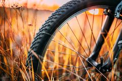 Bicycle Wheel In Dry Autumn Yellow Meadow Grass. Close Up Detail stock photos