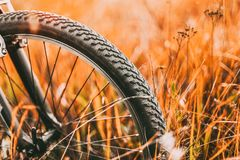 Bicycle Wheel In Dry Autumn Yellow Meadow Grass. Close Up Wheel stock photo