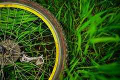 Bicycle wheel on green grass stock image