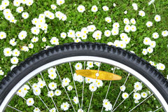 Bicycle wheel on green meadow background Royalty Free Stock Photos