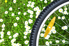 Bicycle wheel on green meadow background Stock Photography