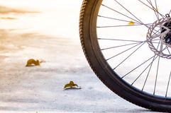 Bicycle wheel on the morning background Royalty Free Stock Photos