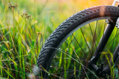 Bicycle Wheel In Summer Green Grass Meadow Field. Sunset Sunrise Royalty Free Stock Photography