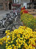Bicycles and flowers in the Netherlands Stock Photo