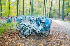 Bicycles in the forest at the Hoge Veluwe Netherlands. Bicycles in the forest at National Park the Hoge Veluwe in the Netherlands in autumn Royalty Free Stock Images
