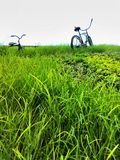 Bicycles in green meadow. Bicycles in green tall grass Royalty Free Stock Image