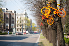 Bicycles hanging in the trees Stock Photo