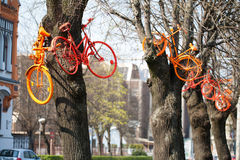 Bicycles hanging in the trees Stock Images