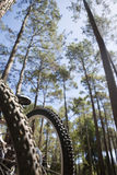 Bicycles leaning against tree in wood, close-up, low angle view Stock Photography