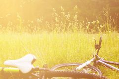 Bicycles lie on the grass. In forest royalty free stock images