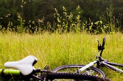 Bicycles lie on the grass. In forest stock photography