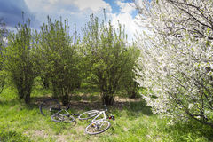 Bicycles in nature Royalty Free Stock Image