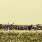 Bicycles near a corn field Stock Photo