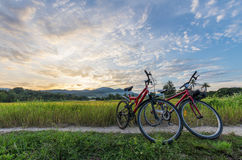 Bicycles at the paddy field. Bicycles at the paddy field with cloudy sunset in the background Royalty Free Stock Photography
