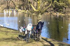 Bicycles in the park by the pond in which birds float. People on the other side launch model sailboats royalty free stock image