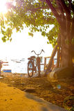 Bicycles parked under the trees Stock Image