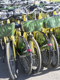 Bicycles for rent Stock Photography