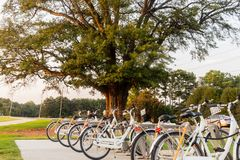 Bicycles for rent at a local park in the town royalty free stock photography