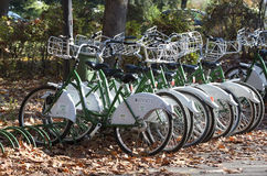 Bicycles. Rental bicycles in Bucharest park Stock Photography