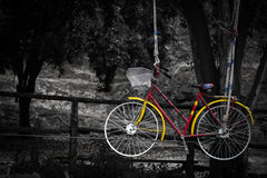 Bicycles on the ropes Retro vintage yellow red. On nature,Color in black and white, Old charming bicycle Stock Images