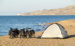 Bicycles and tent on sand beach stock images