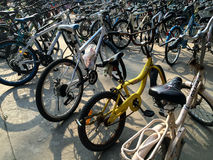 Bicycles in Xiamen University campus, southeast China Royalty Free Stock Photo