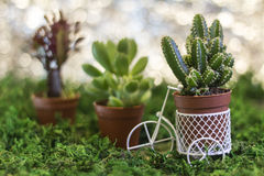 Bicyclette avec des Succulents Photo stock