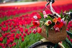 Bicyclette avec le panier tissé Image libre de droits