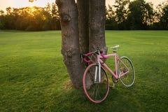Bicyclette de bicyclette de sport en parc Images stock