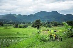 Bicyclette de tour de tourisme de gisement de riz à la ville de pai photos libres de droits