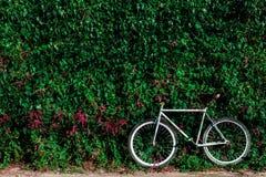 Bicyclette et mur vert de feuille sur le fond Photographie stock