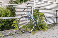 Bicyclette garée et envahie sur le bord de la route Images stock