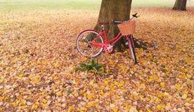Bicyclette rouge de vintage contre un tronc d'arbre entouré par des feuilles d'automne Photo stock