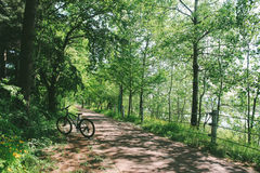 Bicyclette sur le chemin forestier Images libres de droits