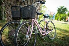 Bicyclettes assorties se penchant contre un arbre photo libre de droits