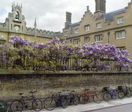 Bicyclettes de Cambridge Photographie stock