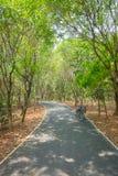 Bicyclettes en parc Images libres de droits