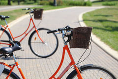 Bicycling in the park. Orange road bike with a basket at the helm.Bicycle in a park in the parking lot royalty free stock photography