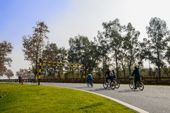 Bicyclist on asphalt road in sunny winter afternoon Stock Images