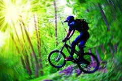 Bicyclist en madera Imágenes de archivo libres de regalías